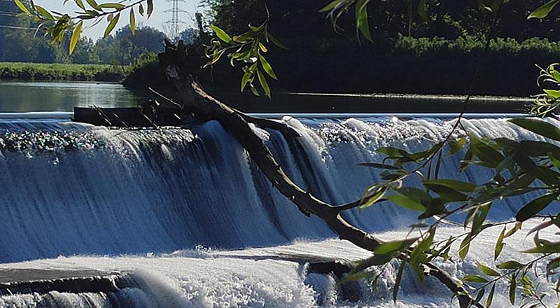 Ah che tronco minaccioso incombe sulla cascata del Serio, il fiume malinconico di Crema, in quel della Palata, zona mistica